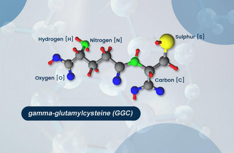 GGC molecule